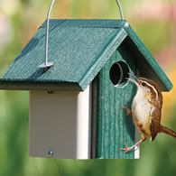 Feed at birdhouse