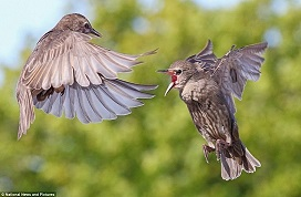 Bird fight 2