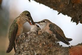 Feedingfrenzy