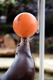 Seal w ball small
