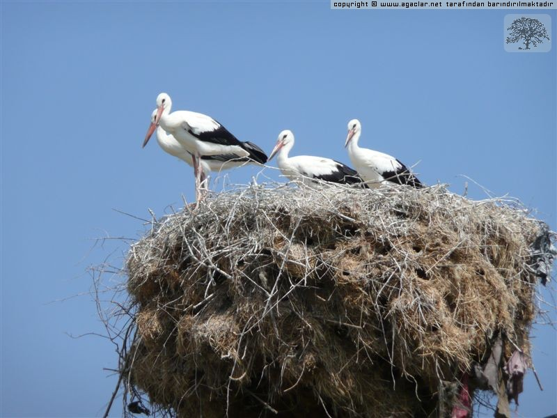 Birds on nest