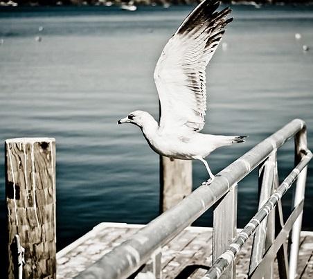 Watchful bird