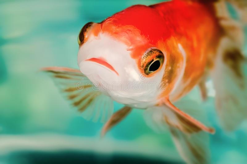 Fish questioning